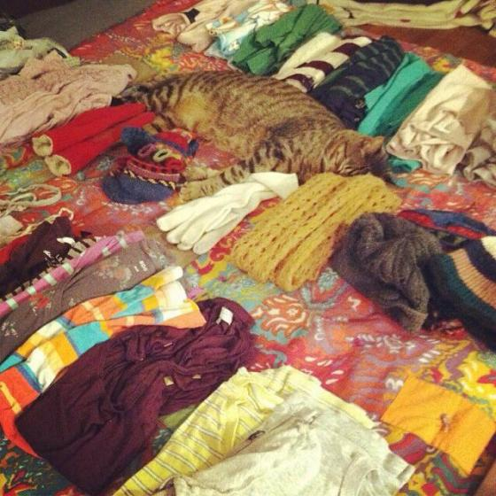The clothes are for swapping; the cat is not