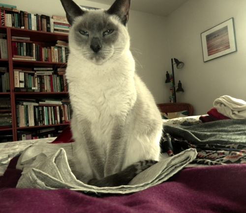cat on pile of skirts